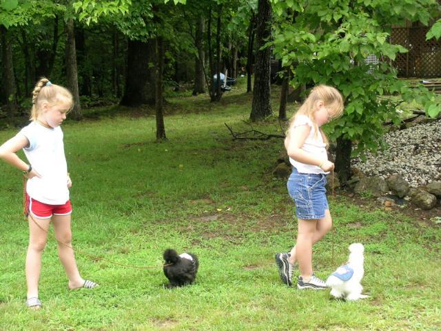 walking silkies