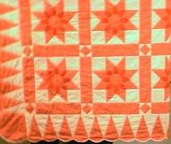 Pink Amish Dahlia